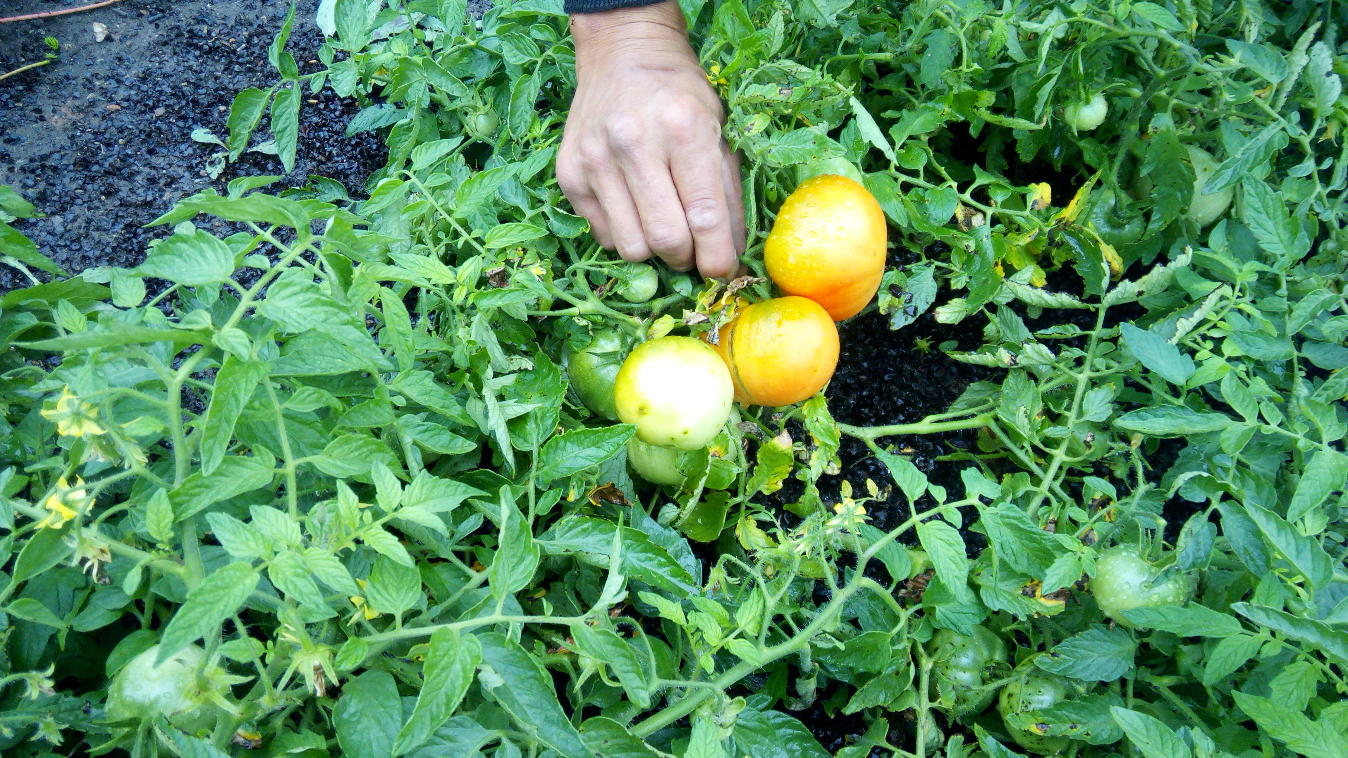 Как сделать соус для макарон из томатной пасты 10
