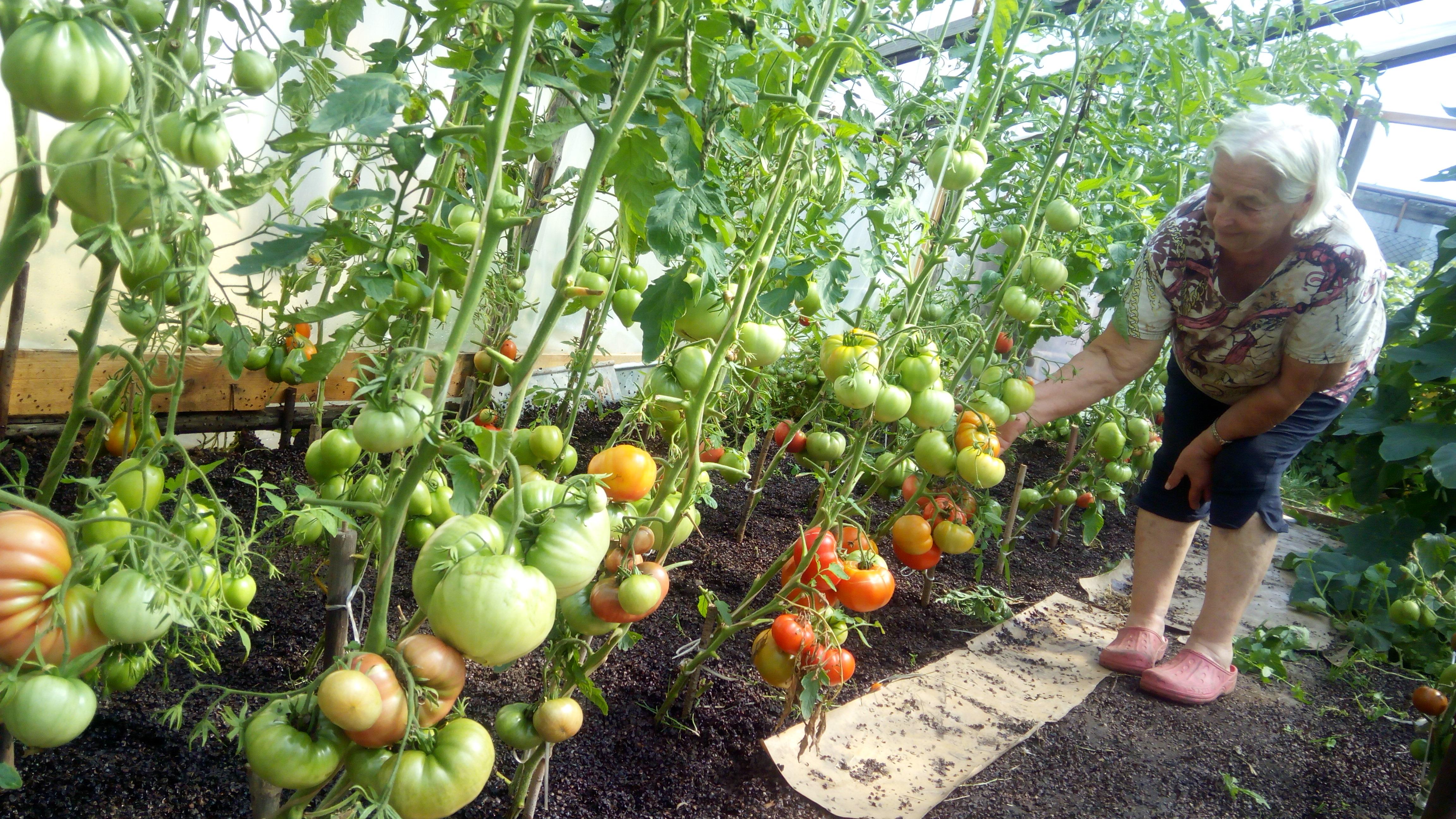 Помидоры : полный курс по выращиванию томатов от посева до урожая
