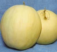 Секреты выращивания арбузов и дынь в средней полосе